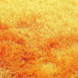 SG Suave orangina | Rugs / Designer rugs | kymo