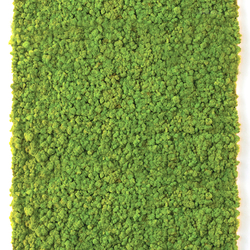 Moss Wall | Living / Green walls | Verde Profilo