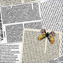 Ultime Notizie | Carrelage pour sol | Ceramica Bardelli
