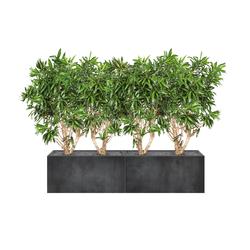 Heckenelement Dracaena niedrig 120 cm | Separación de ambientes | art aqua