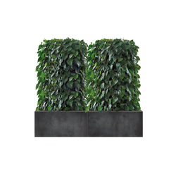 Heckenelement Sanseveria niedrig 120-140 cm | Space dividers | art aqua