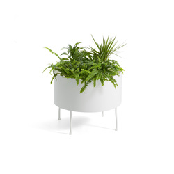 Green Pedestals | Plant holders / Plant stands | OFFECCT
