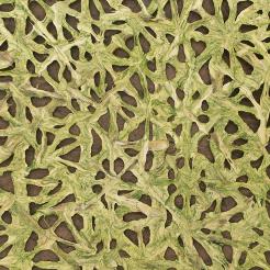 Spiderweb Woven Barkskin™ Willow | Carta parati / tappezzeria | Caba Barkskin