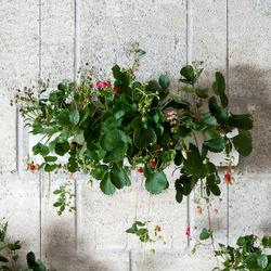 Hanging Garden | Fioriere | Urbanature