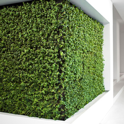Project - Grüne Wand® | Living / Green walls | art aqua