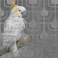 Cockatoo | Wall art / Murals | Wall&decò