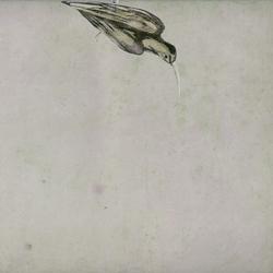 Haiku | Wall art / Murals | Wall&decò