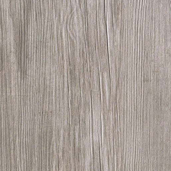 Axi Grey Silver Fir | Carrelages | Atlas Concorde