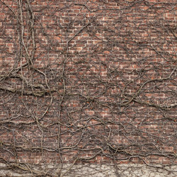 Captured Reality | Brick Wall Climber | Bespoke | Mr Perswall