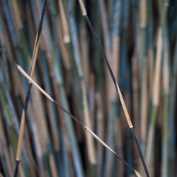 Photo | Bamboo | A medida | Mr Perswall