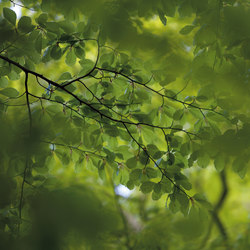 Photo | Green leaves | Sur mesure | Mr Perswall