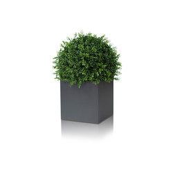 Linné | Flowerpots / Planters | Röshults