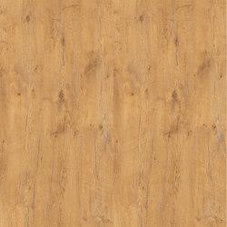 Pale Lancelot Oak | Panneaux de bois / dérivés du bois | Pfleiderer