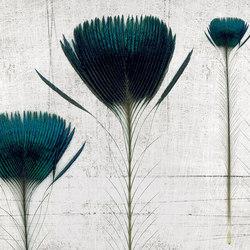 Pluma de pavo | Wandbilder / Kunst | Inkiostro Bianco
