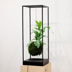 Plant Bondage Noir | Plant pots | Farrah Sit