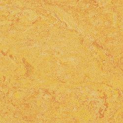 Marmoleum Real dandelion | Linoleum flooring | Forbo Flooring