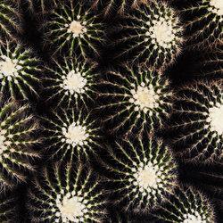Tropicana | Beachtowel Cactus | Towels | schoenstaub