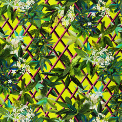 Nouveaux Mondes Fabrics | Canopy - Lime | Tejidos para cortinas | Designers Guild