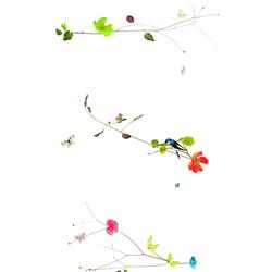 CECILIA R - 7001 | Roller blinds | Création Baumann