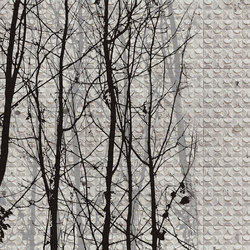 Fagales | Wandbeläge | Wall&decò