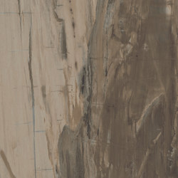 Petrified Wood Brown | Tiles | ASCOT CERAMICHE