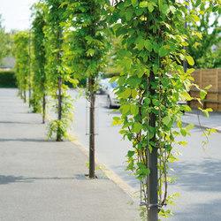 Babylone posts | Elementi di protezione per alberi | AREA