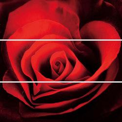 Lumen Black Lux Composizione Rose | Keramik Fliesen | ASCOT CERAMICHE