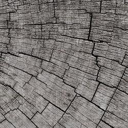 Crust Mantis | A medida | GLAMORA