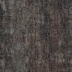 Crust Moth | Wall coverings | GLAMORA