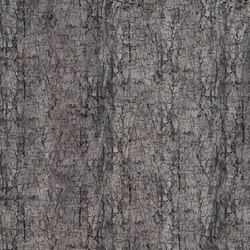 Crust Moth | Wall coverings | GLAMORA