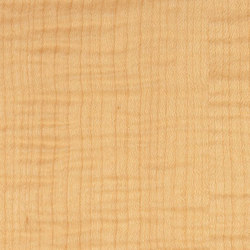 Decospan Maple Figured | Furniere | Decospan