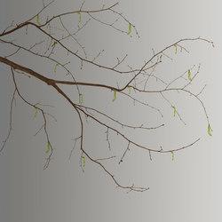Essence Sakura | A medida | GLAMORA