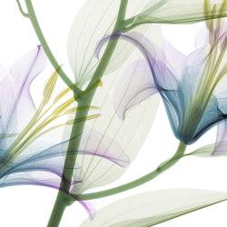 Visions Dandy | Bespoke wall coverings | GLAMORA