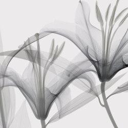 Visions Dandy | Wandbeläge | GLAMORA