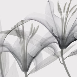 Visions Dandy | Rivestimenti pareti | GLAMORA