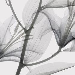Visions Dandy | Sur mesure | GLAMORA