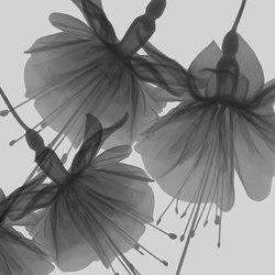 Visions Dandy | Wall coverings | GLAMORA