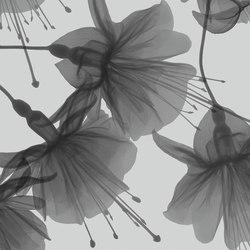Visions Dandy | A medida | GLAMORA
