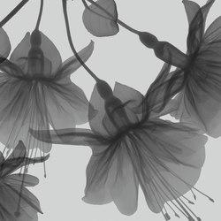 Visions Dandy | Revêtements de murs | GLAMORA
