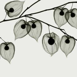 Visions Asakusa | Revestimientos de pared | GLAMORA