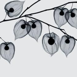 Visions Asakusa | Wall coverings | GLAMORA