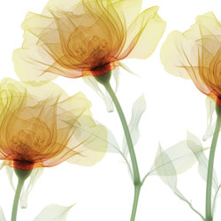 Visions Inner Sense | Revestimientos de pared | GLAMORA
