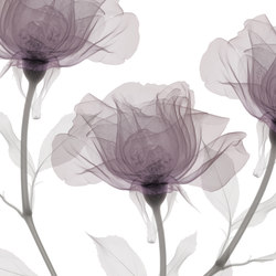 Visions Inner Sense | Wandbeläge | GLAMORA