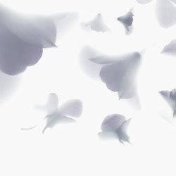 Visions Pink Rhapsody | Wandbeläge | GLAMORA
