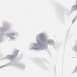 Visions Lazy Sundae | Wandbeläge | GLAMORA