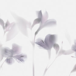 Visions Lazy Sundae | Wall coverings | GLAMORA