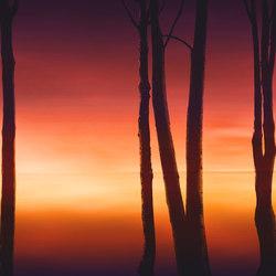 Visions Lifelines | Wandbeläge | GLAMORA