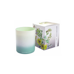 Candles & Diffusers - Amber Forest Candle | Candlesticks / Candleholder | Designers Guild