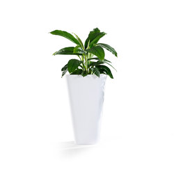 Kono | Macetas plantas / Jardineras | Derlot Editions
