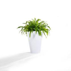 Kono | Bacs à fleurs / Jardinières | Derlot Editions